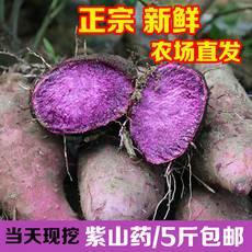 江西紫玉淮山贛州安遠三百山紫色大薯毛薯 5斤裝 紫山藥新鮮腳板薯